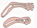Lo sviluppo degli organi del feto a 4 mesi di gestazione