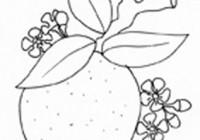 Disegni Di Frutta Invernale Da Colorare Da Stampare Gratis