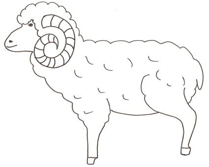 Disegno di un ariete da colorare cose per crescere - Pagine da colorare per pecore ...