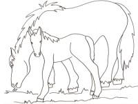 Disegni Da Colorare Di Cavalli Selvaggi.Disegni Di Cavalli Da Colorare Immagini Di Cavalli Da