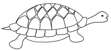 Disegno Di Tartaruga Da Colorare Cose Per Crescere