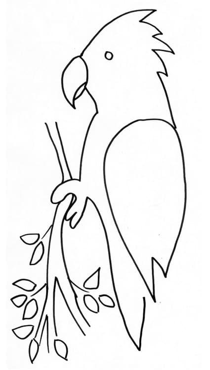 pappagallo stampa e  colora disegno