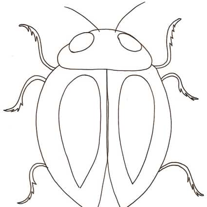 scarabeo da