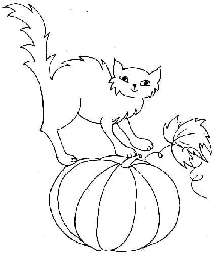 gatto-con-zucca