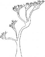 Albero Asiatico Da Colorare Cose Per Crescere