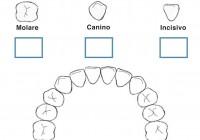 Denti Dei Bambini E Igiene Orale Dentizione Dei Bambini