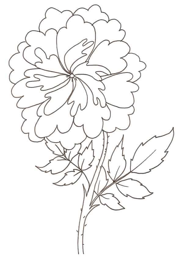 rosa-antica