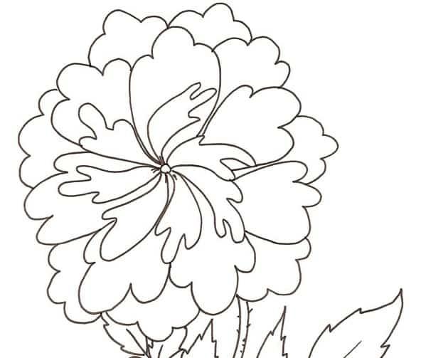 Rosa antica da colorare