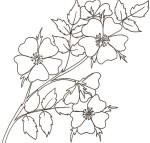Disegno di rose selvatiche
