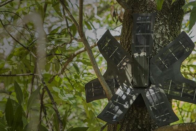 I cellulari che aiutano gli alberi