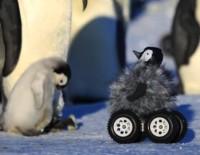 foto pinguino robot