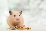 Alimentazione del criceto