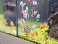 L acquario per i pesci rossi cose per crescere for Acquario per pesci rossi usato