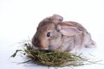 Alimentazione del coniglio nano