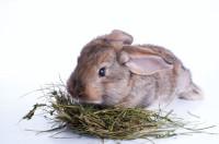 Alimentazione coniglio nano