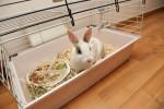 La gabbia per un coniglio nano