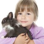Il coniglio nano: razze e comportamento