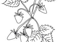 Frutta Di Primavera Da Colorare Cose Per Crescere