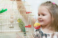 uccelli domestici