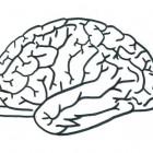 Disegno del cervello