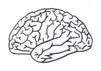 Disegno del cervello scuola primaria
