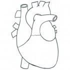 Disegno del cuore per la scuola primaria