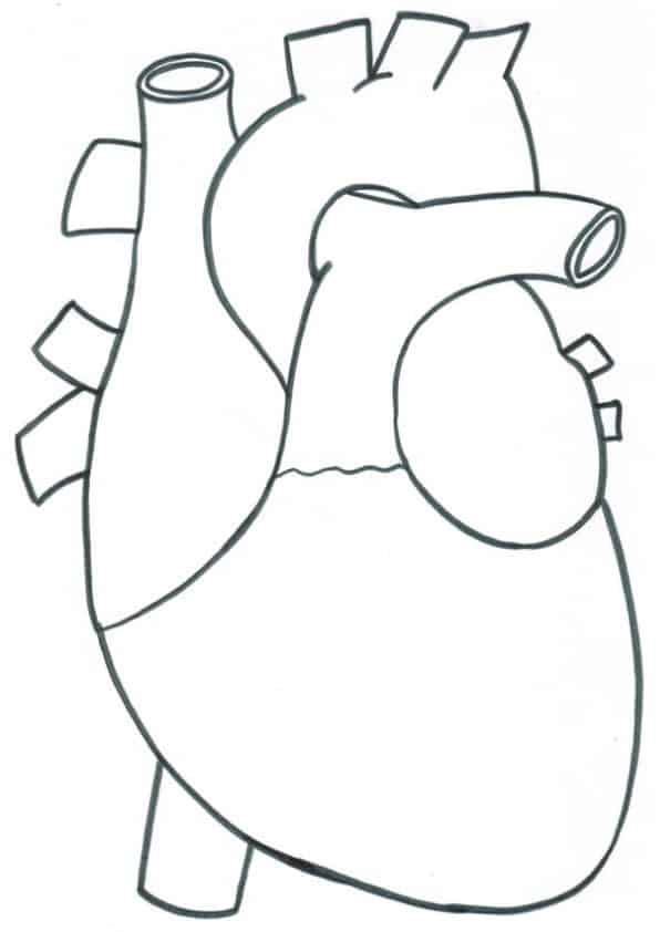 Disegno del cuore scuola primaria