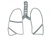 polmoni ev