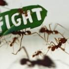 Le formiche protestano!