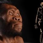 Potrebbe essere un tuo antenato!