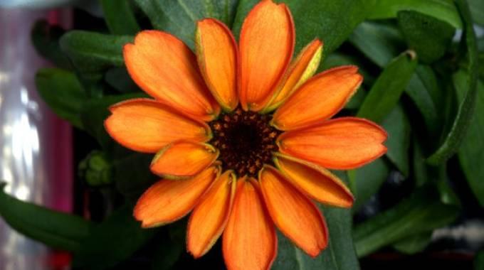 Fiore nello spazio
