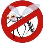 Un virus dalle zanzare: è Zika