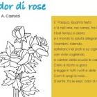 Odor di rose