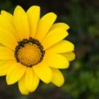 Petaloso: un fiore con tanti petali