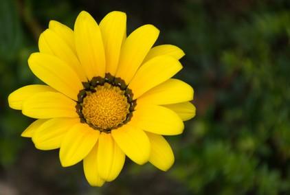 fiore petaloso - giornale per bambini