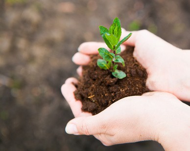 Female hands keeping young plant against the soil. Ecology conce
