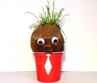 signor patata