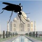 Il Taj Mahal in pericolo per colpa della cacca verde