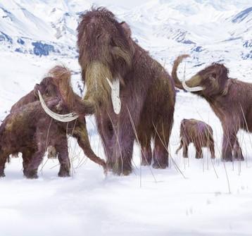 Scoperta mammut raccontata ai bambini