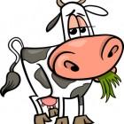 La mucca perde le corna