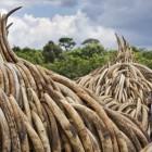 Stop al massacro degli elefanti