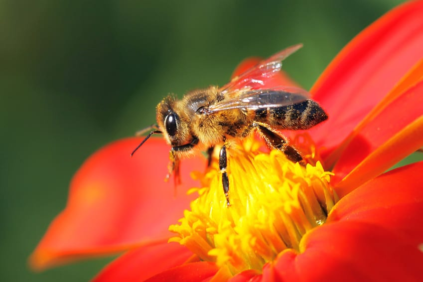 Le api spiegate ai bambini