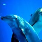 Chiacchiere tra delfini