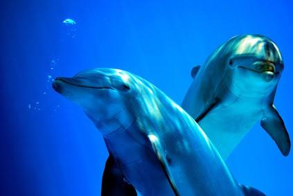 Linguaggio dei delfini spiegato ai bambini