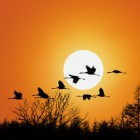 Gli uccelli cambiano casa
