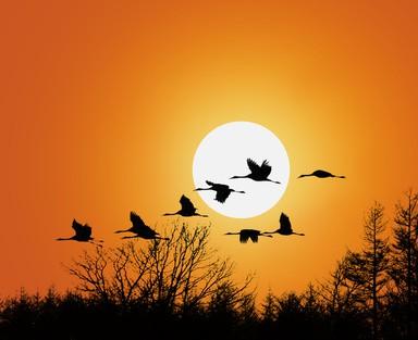 Uccelli migratori spiegati ai bambini