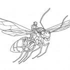 Ant-Man che vola da colorare