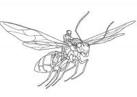 Ant-Man da colorare