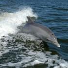 Il delfino torna in mare