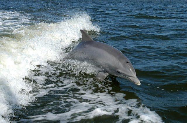 delfino_arno